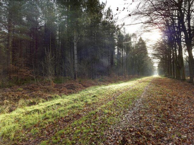 V8N10  NWT Bretts Wood, Norfolk, UK